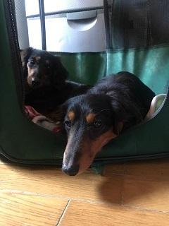 【犬猫・移動先募集】今は犬は2頭だけです(4/14訪問)_f0242002_10294434.jpg