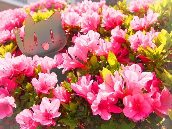 Twitter日記のまとめ_a0201203_16004459.jpg