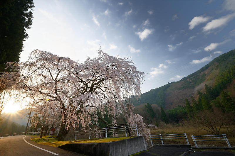 2020桜巡り@京北町 魚ヶ淵の吊り橋_f0032011_21063257.jpg