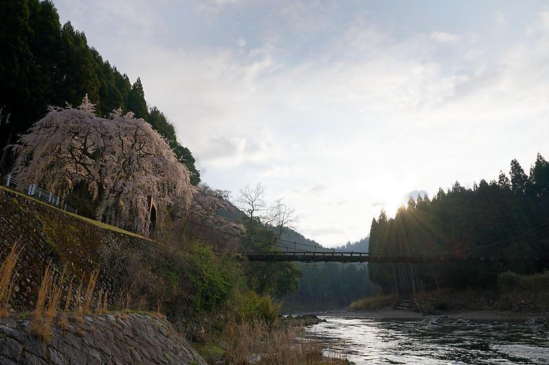 2020桜巡り@京北町 魚ヶ淵の吊り橋_f0032011_21170134.jpg