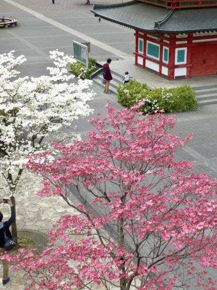 わが町駅前シンボル七重の塔_c0248013_10225578.jpeg