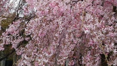 おうちでカラーセラピー♪【ピンク】_c0200917_17024889.jpg