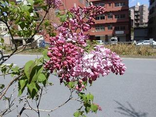 おうちでカラーセラピー♪【ピンク】_c0200917_20265093.jpg