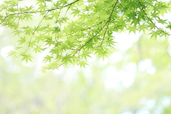 四季の森公園_b0049843_921147.jpg