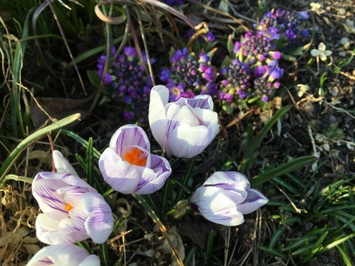 小さい春みつけた~美瑛散歩_e0326953_19460686.jpg