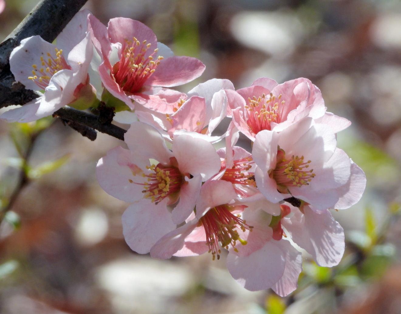 サクラが咲いて ~ 在庫より ~_c0305565_17362892.jpg