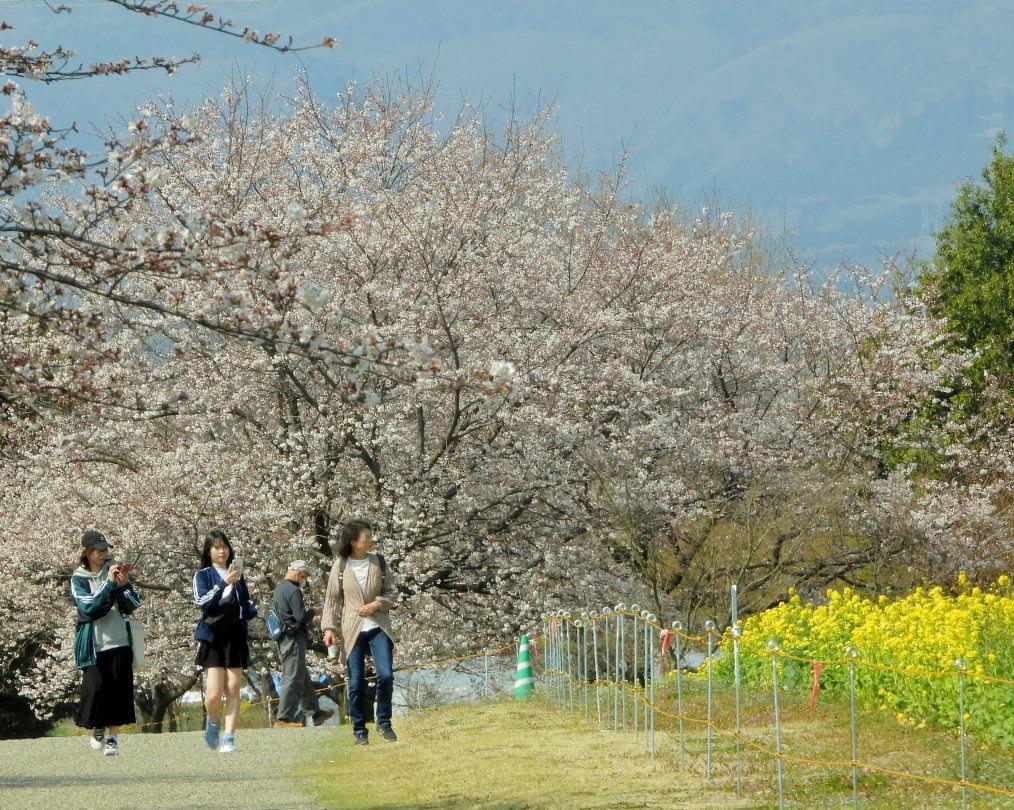 サクラが咲いて ~ 在庫より ~_c0305565_17372030.jpg