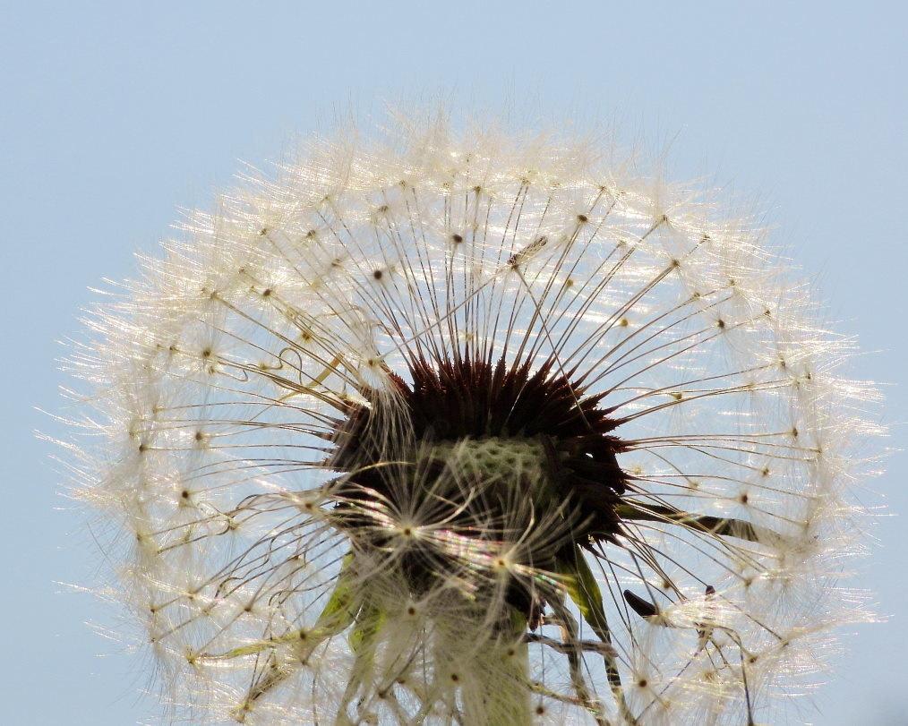 サクラが咲いて ~ 在庫より ~_c0305565_17442235.jpg