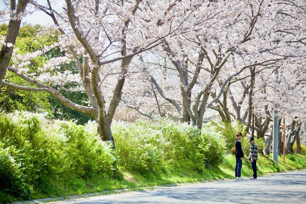 桜咲く_c0163369_12554027.jpeg