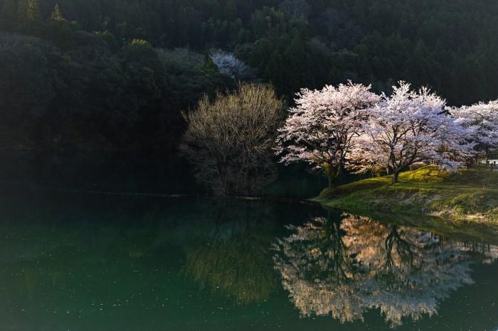 桜_a0253273_19121244.jpg