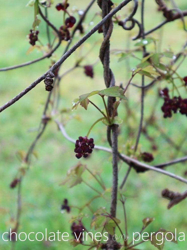 たおやかな春、しなやかな春_a0147281_16555887.jpg