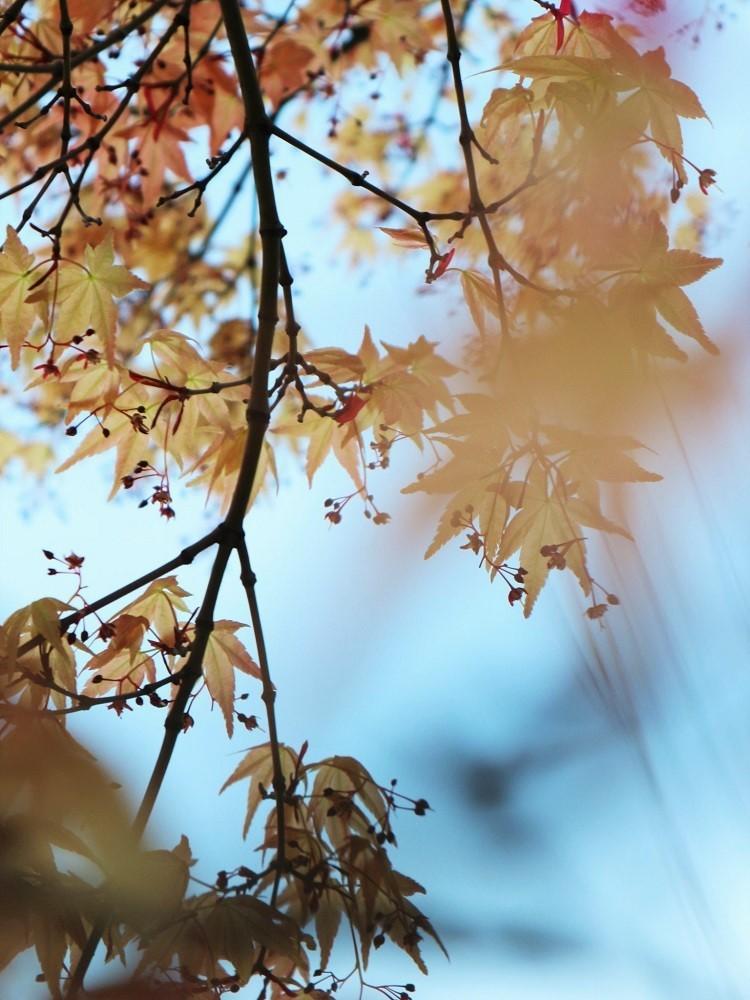 たおやかな春、しなやかな春_a0147281_16560019.jpg