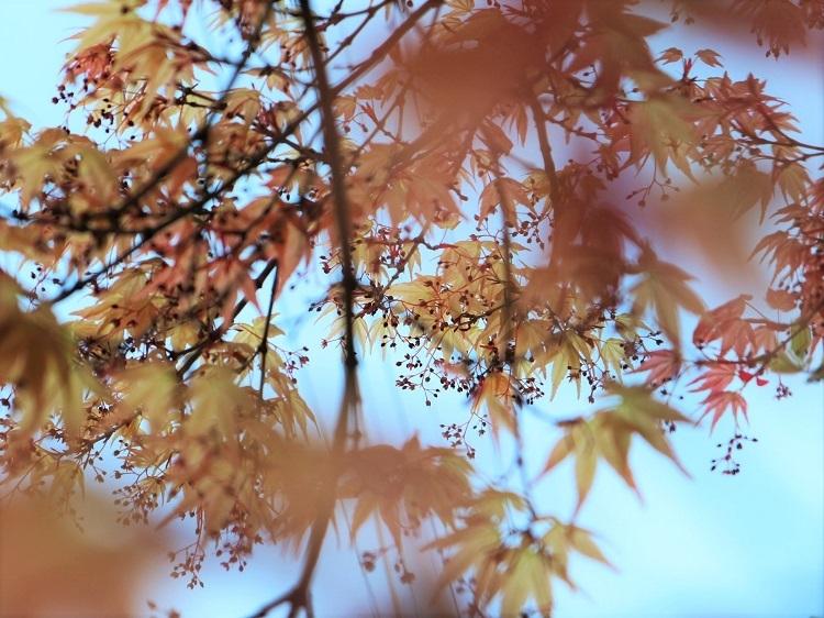 たおやかな春、しなやかな春_a0147281_16560257.jpg