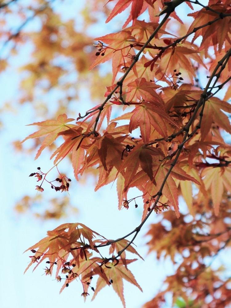 たおやかな春、しなやかな春_a0147281_16560545.jpg