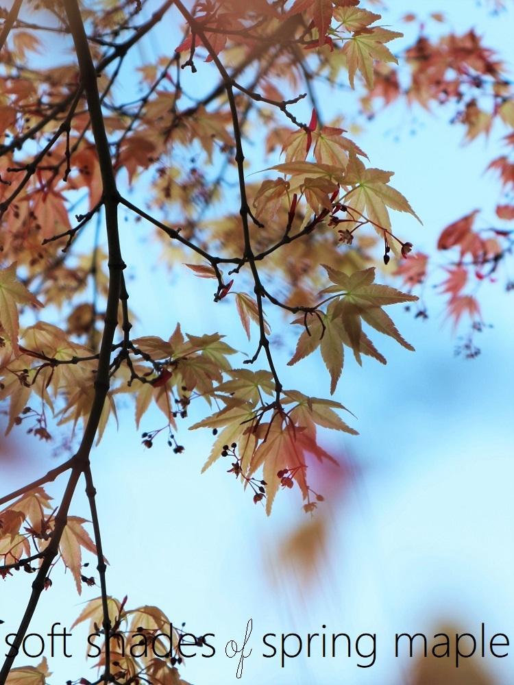 たおやかな春、しなやかな春_a0147281_16560704.jpg