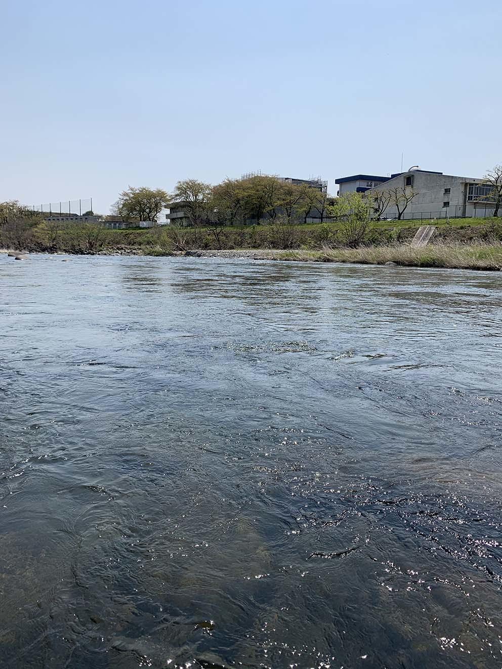 渡良瀬川の近況_c0095801_23060337.jpg