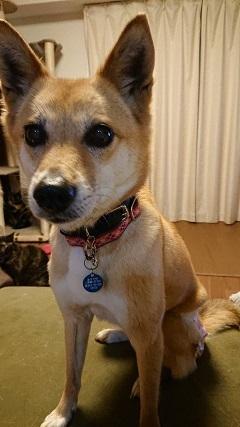 【犬猫・移動先募集】今は犬は2頭だけです(4/14訪問)_f0242002_16414832.jpg