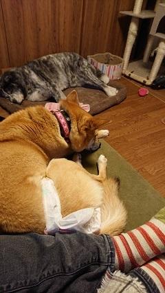 【犬猫・移動先募集】今は犬は2頭だけです(4/14訪問)_f0242002_16415432.jpg