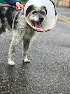 【犬猫・移動先募集】今は犬は2頭だけです(4/14訪問)_f0242002_16573176.jpg