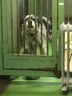 【犬猫・移動先募集】今は犬は2頭だけです(4/14訪問)_f0242002_16590637.jpg