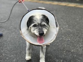 【犬猫・移動先募集】今は犬は2頭だけです(4/14訪問)_f0242002_17015945.jpg