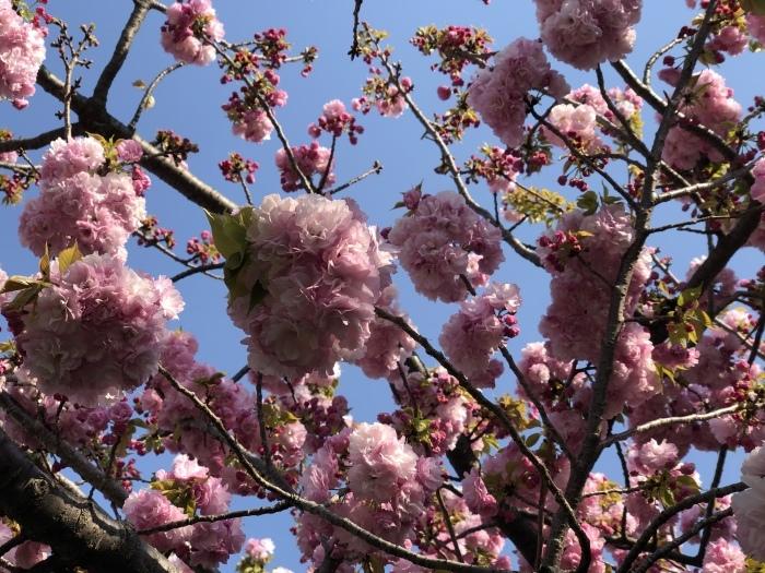 8年目の、花は盛りに_c0042704_22195347.jpeg