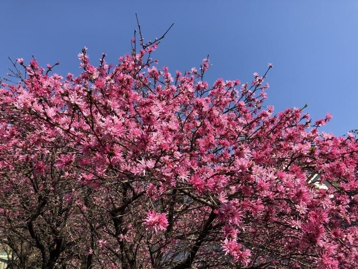 8年目の、花は盛りに_c0042704_22233581.jpeg
