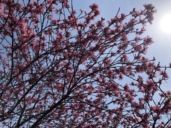 8年目の、花は盛りに_c0042704_22251548.jpeg