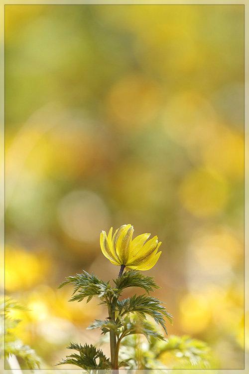 花うつつ_e0235910_19210180.jpg