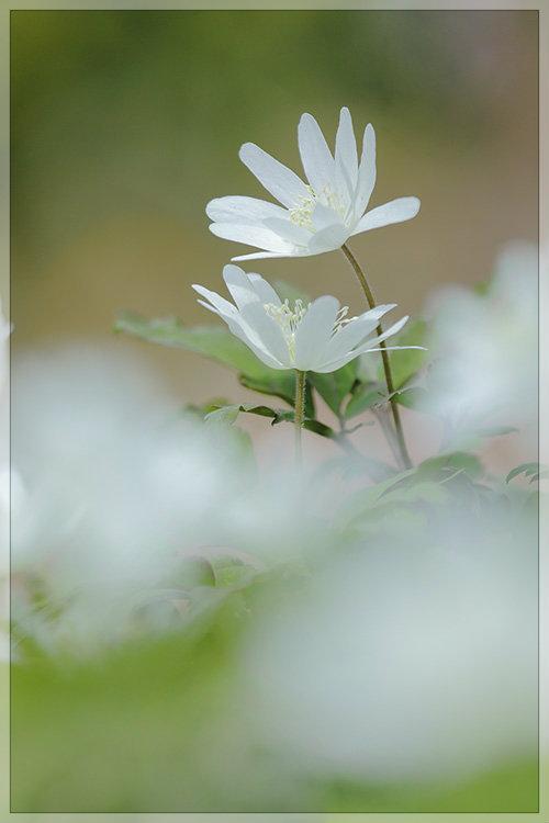 花うつつ_e0235910_19211378.jpg