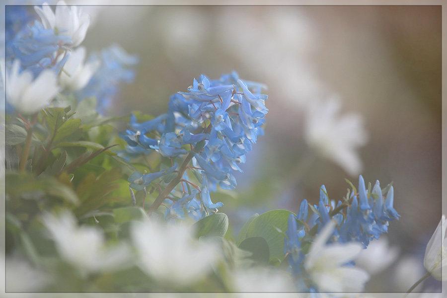 花うつつ_e0235910_19213906.jpg