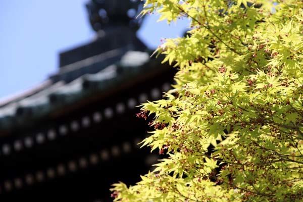 新緑がスタート 嵯峨釈迦堂清凉寺_e0048413_19493518.jpg