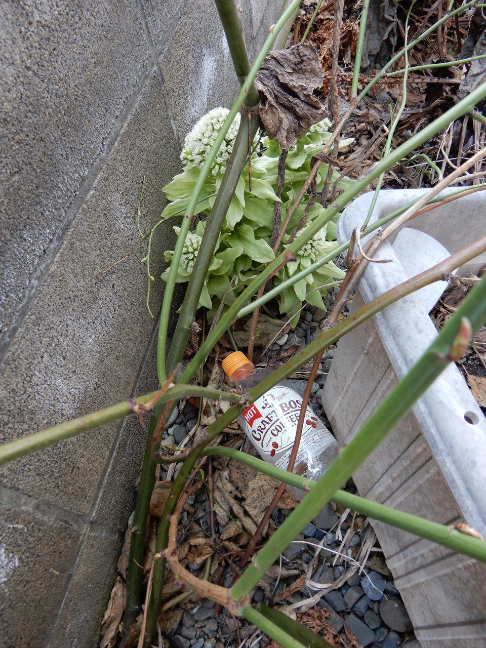 モクレンやレンギョウの花びらがのぞいています_c0025115_22050399.jpg