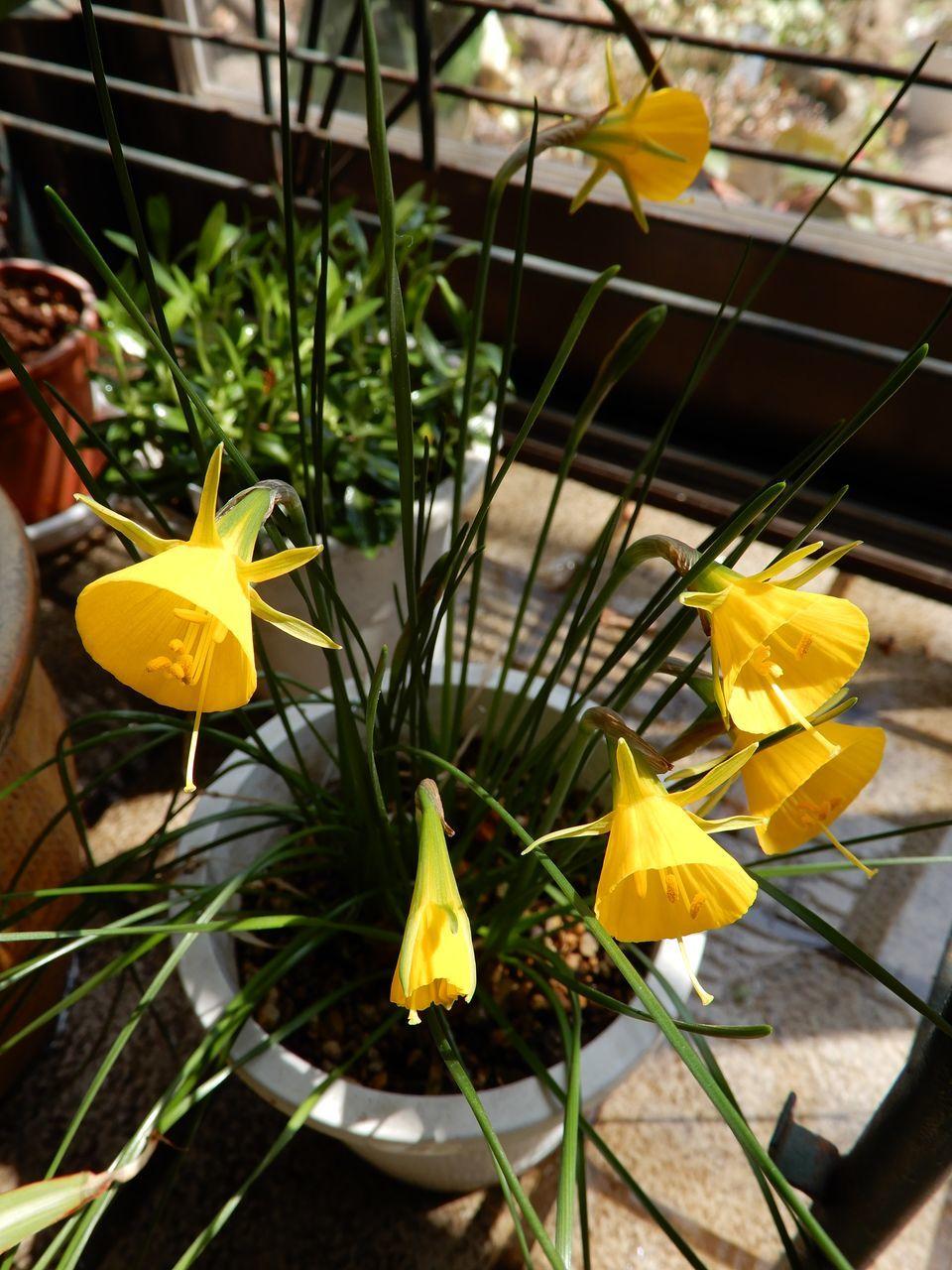 モクレンやレンギョウの花びらがのぞいています_c0025115_22091684.jpg