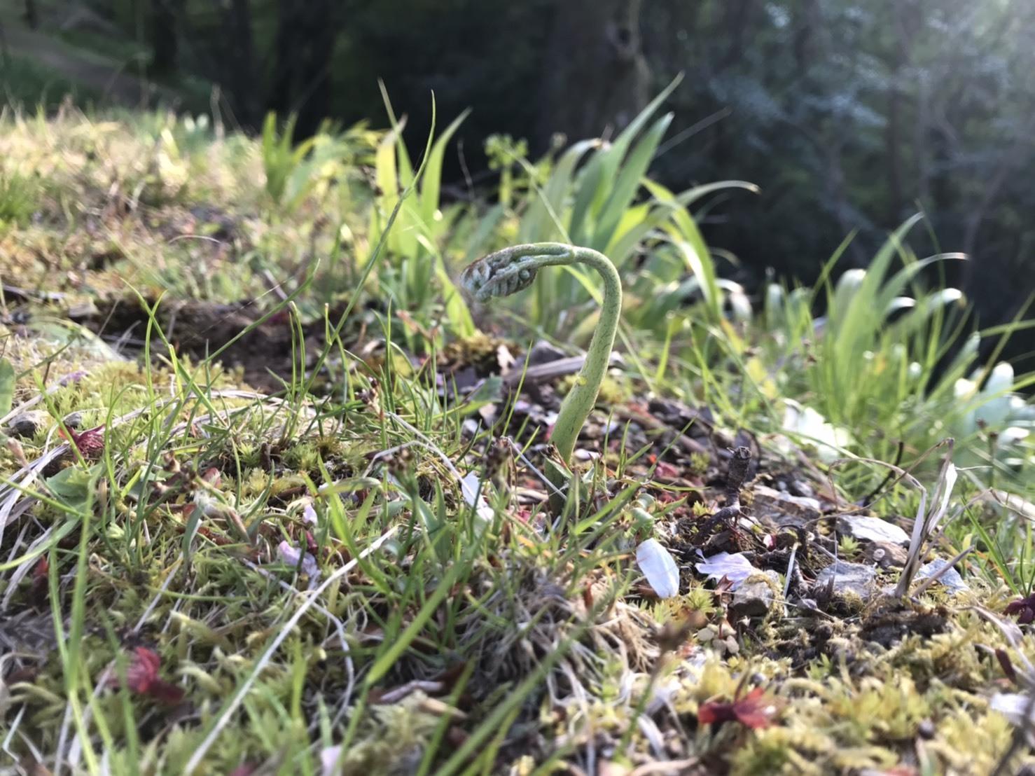 【春の味覚】わらびの収穫に行ってきました!_e0154524_15530845.jpg