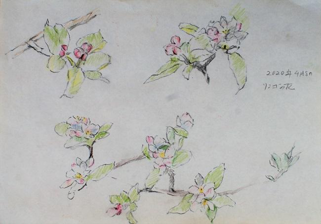 リンゴの花_c0236929_21221863.jpg