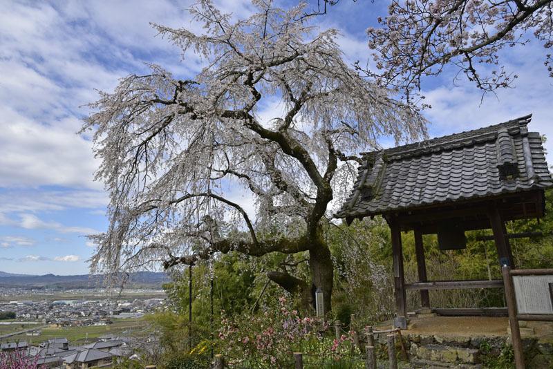 地蔵禅院_e0367330_20322723.jpg