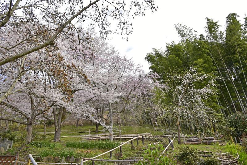 地蔵禅院_e0367330_20333624.jpg