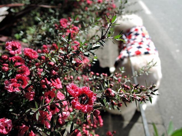 散歩屋日誌【40】_c0062832_15354086.jpg
