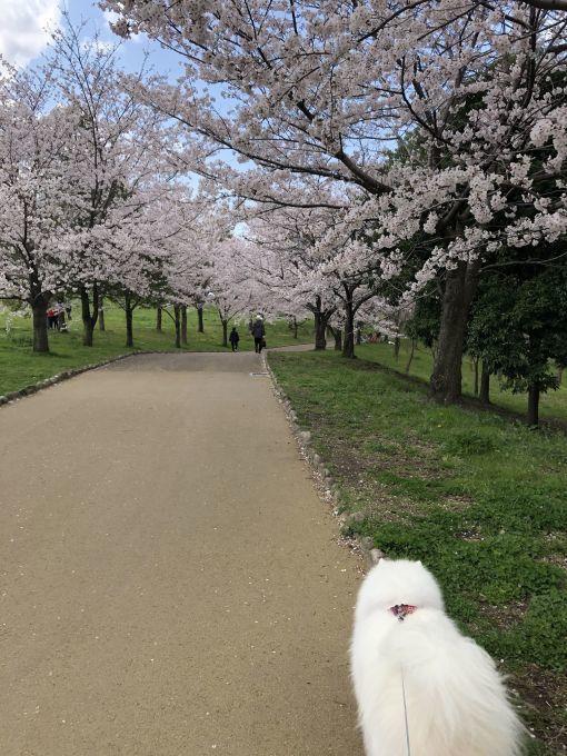 2020年花見散歩_f0128542_17283557.jpg