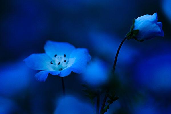 春の花は次から次へ_e0022047_23101251.jpg