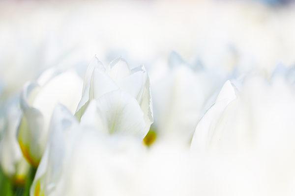 春の花は次から次へ_e0022047_23103617.jpg
