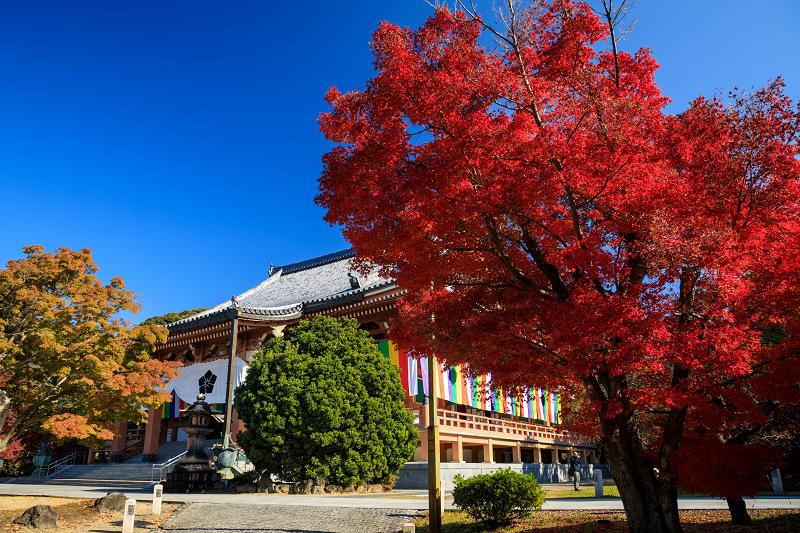 紅葉が彩る京都2019 散り進む智積院_f0155048_23435567.jpg