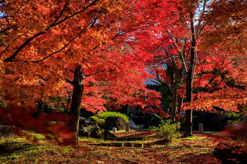 紅葉が彩る京都2019 散り進む智積院_f0155048_23441754.jpg