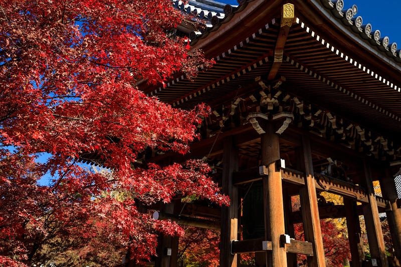 紅葉が彩る京都2019 散り進む智積院_f0155048_23442019.jpg