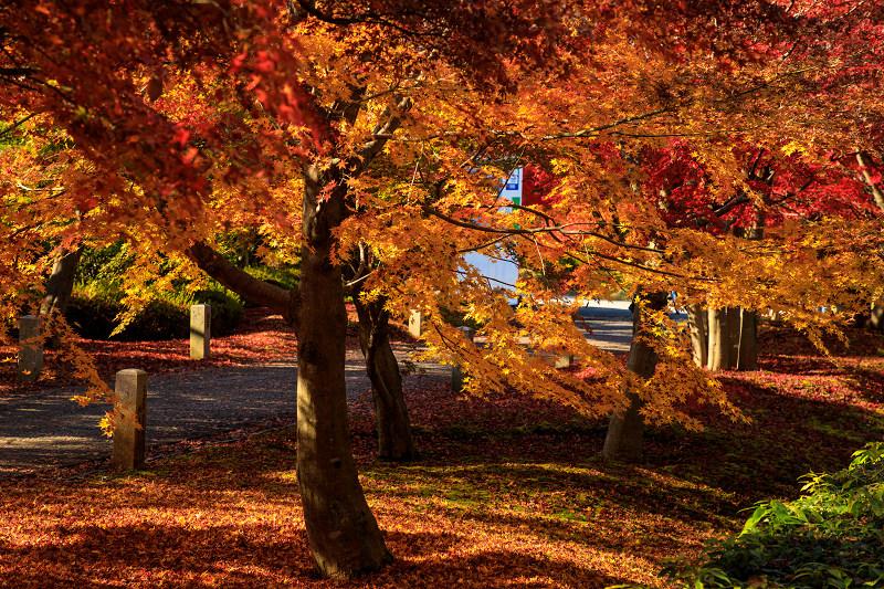 紅葉が彩る京都2019 散り進む智積院_f0155048_23442333.jpg
