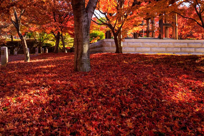 紅葉が彩る京都2019 散り進む智積院_f0155048_23442751.jpg