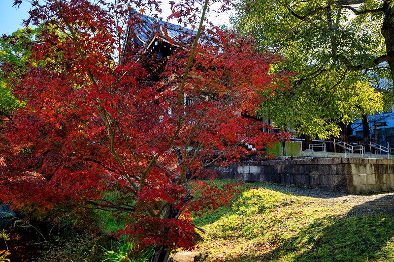 紅葉が彩る京都2019 散り進む智積院_f0155048_2344714.jpg