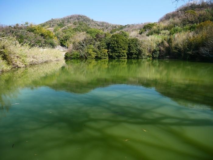 郊外の灌漑用の池にて  2020-04-17 00:00   _b0093754_23160550.jpg