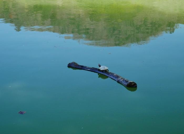 郊外の灌漑用の池にて  2020-04-17 00:00   _b0093754_23161572.jpg